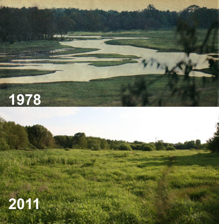 Dawne koryto Jeziorki między wałem a Argentyną (1978 vs 2011)